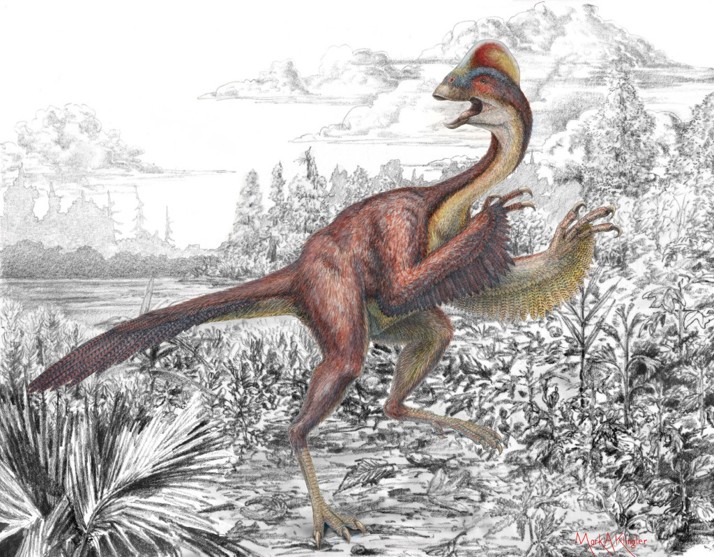 "With its head crest and presumably feathered forelegs, the newly discovered and described dinosaur Anzu wyliei was nicknamed the ""chicken from hell"" by its discoverers at the Carnegie Museum of Natural History, Smithsonian Institution's National Museum of Natural History and University of Utah. (Image: Mark Klinger/Carnegie Musem)"