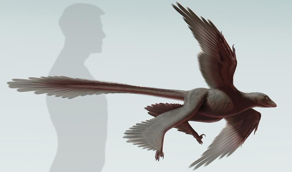 Chanyuraptor yangi